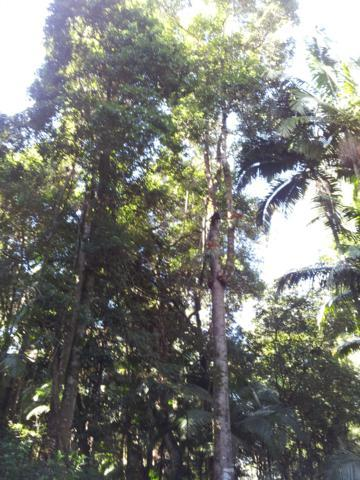 NorthCoast rainforest trees