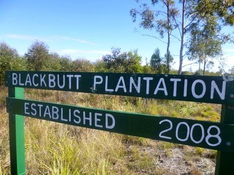 Blackbutt Plantation, established 2008