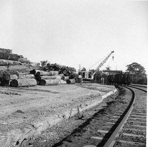 Wauchope Log Yard, 1961