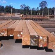 large_Image - Coffs Harbour Hardwoods - Tallowwood beams.jpg