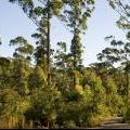 medium_Forest Regeneration - Greens Highway 20 December, 2012_0.jpg